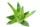 Mi az az Aloe Vera. Aloe verás matrachuzat